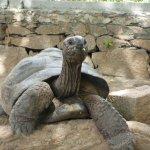 Schildkröte auf der anderen Straßenseite