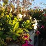 Photo de Roof Garden Les Etoiles