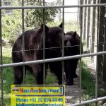 Zoo Tour - +41 79 675 44 49 - www.happytourswitzerland.com