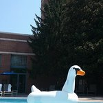 Foto di Lansdowne Resort and Spa