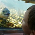 My kids really enjoyed the fish hatchery!!