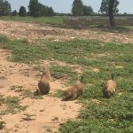 I really enjoyed watching and feeding the prairie dogs.  I would highly recommend it.
