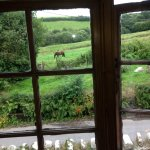 View from our bedroom at Great Sloncombe Farm B&B