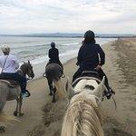 Foto de Monterey Bay Equestrian Center