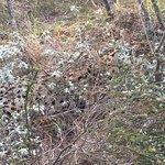 Spot the Serval!