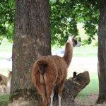 Foto de Virginia Safari Park