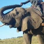 Photo of Elephant Sanctuary