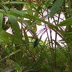 Photo de Garden of the Groves