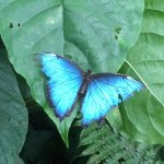 Photo de Butterfly Conservatory