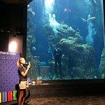 Ocean tank diver show