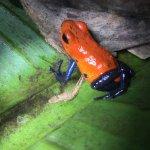 Photo of Arenal Oasis Wildlife Refuge