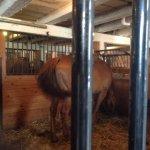 Amish farm 8