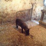 Amish farm 11