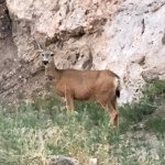 Some photos of what you can expect at Hidden Canyon Ranch! Everything exceeded my expectations-