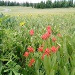 Wildflower Days!