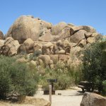 Jumbo Rocks Campground, Joshua Tree National Park