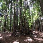 صورة فوتوغرافية لـ Makawao Forest Reserve