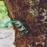 Rabeang Pasak Tree House Resort Foto