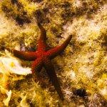 Photo of Marine Divers