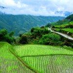 Dragon's Backbone Rice Terraces Foto