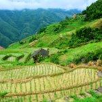 Photo of Dragon's Backbone Rice Terraces