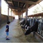 Nos encanta ver las vacas tan de cerca