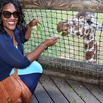 Giraffes are my favorite - what a special treat to be able to interact with them!