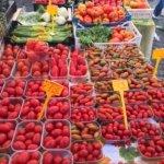 various tomato