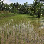 Foto di Villa Sumbing Indah