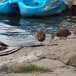 Les canards sont au rendez-vous