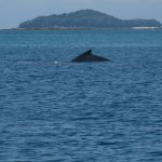 Photo of Gem Charters -  Day  Tours