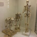 Photo of Zoological Museum