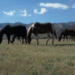 A few of our horses grazing with the amazing Park City mountains behind them.