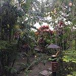 Photo de The Fiji Orchid