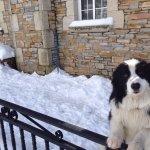 Nuestro perro Søren