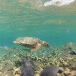 Turtleeee