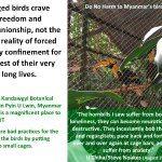 Bad treatment of hornbills.