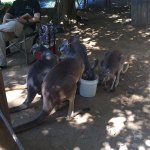 Wildlife World Zoo and Aquarium Foto