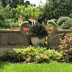 These beautiful swans are along Holis Gardens.