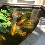 Inside Holis Garden is a pond with magnificent koi.