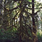 wildwood mossy tree
