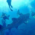 WHALE SHARK!!