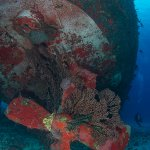 The C-53 or Felipe Xicoténcatl is a perfect Divers wreck, as the ship was scrubbed of all harmfu