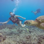 Swimming with a sea turtle!