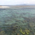 Inner reef area