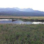 Photo of Potter Marsh Bird Sanctuary