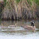 Photo de Potter Marsh Bird Sanctuary