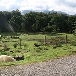 View from the B&B with paddock full of animals and the mountains behind.