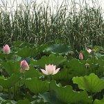 Fairmont Yangcheng Lake Foto