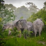 Some Elephants we spotted on one of our safaris